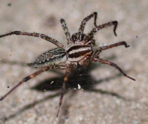 Spiders Have Personalities Researchers Claim