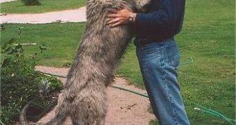 The Tallest Dog Breed: Irish Wolfhound