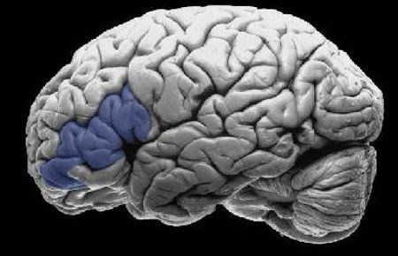 This One Very Specific Brain Area Might Be What Makes Us Humans