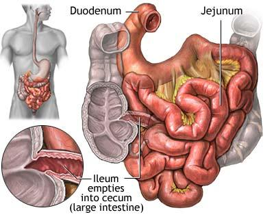 5 facts about the small intestine small intestine ccuart Gallery