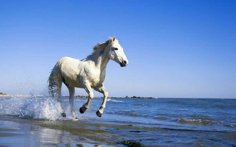 Free horse hd wallpaper | 1600x900 | #13113.