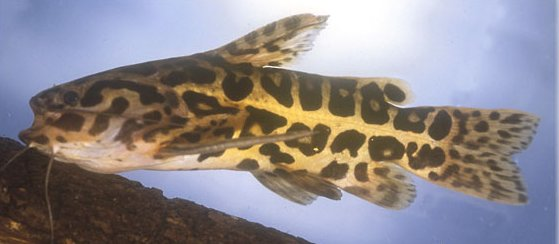 Oral Sex Fish
