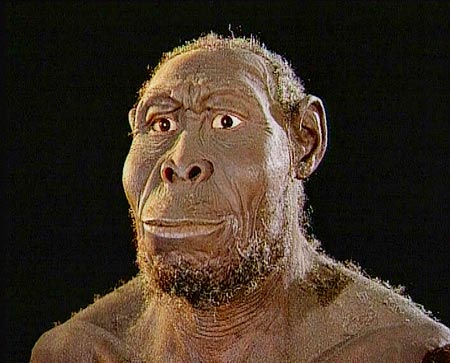 First Humans Were More Ape-Like than Human-Like