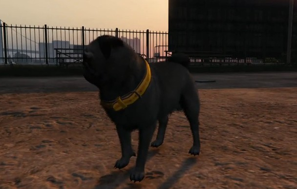 Wildlife Photography Challenge - Grand Theft Auto V Game ... |Gta 5 Dog Breeds