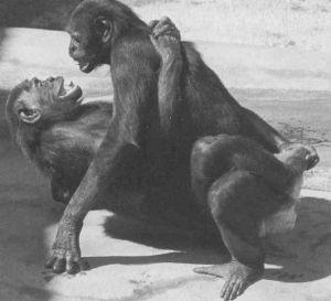 Bonobo monkey bisexual