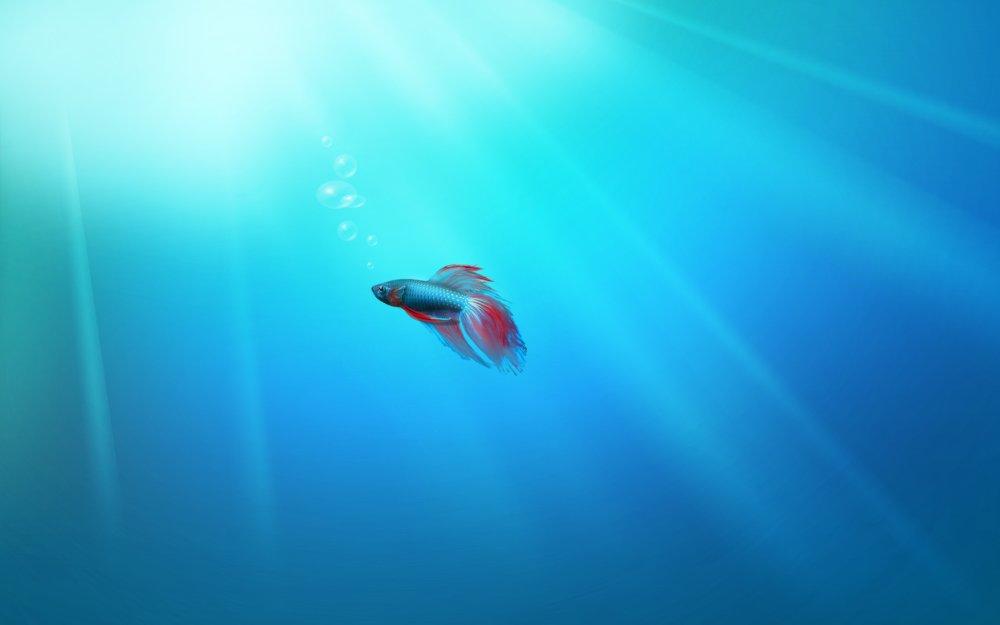 Windows 7 Beta 1 Build 7000 Betta Fish Wallpaper