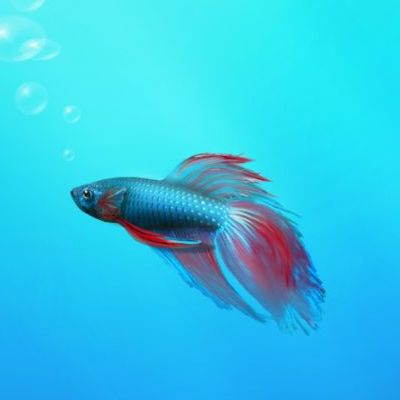 what\u0027s new in windows 7 release candidate (rc) build 7100windows 7 betta fish wallpaper