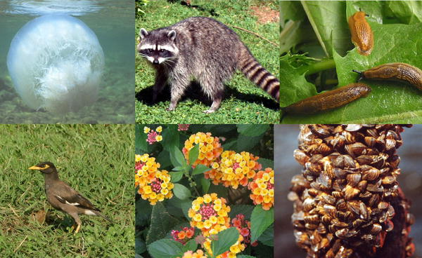 Why Is Biodiversity Essential For Human Life