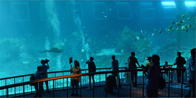 Biggest Aquarium | World S Largest Aquarium Opens In Singapore