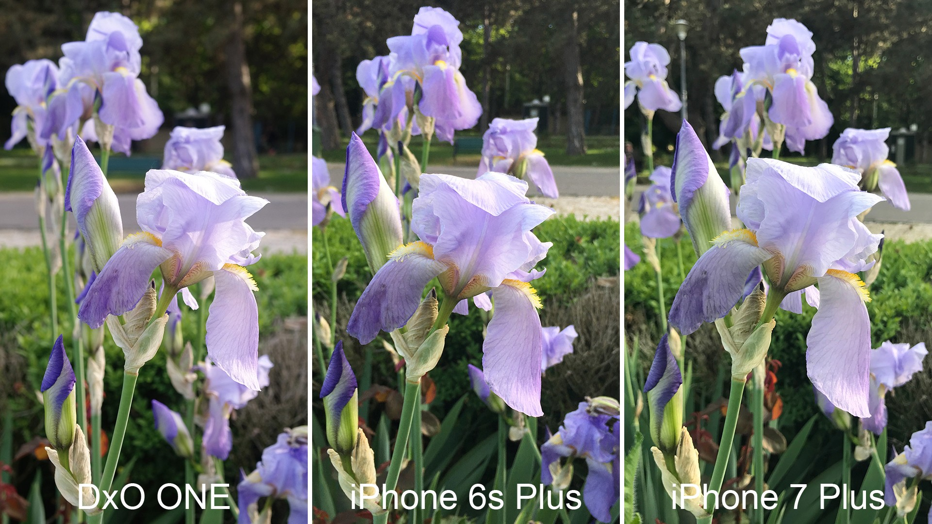 IPHONE 6 VS IPHONE 6S PLUS